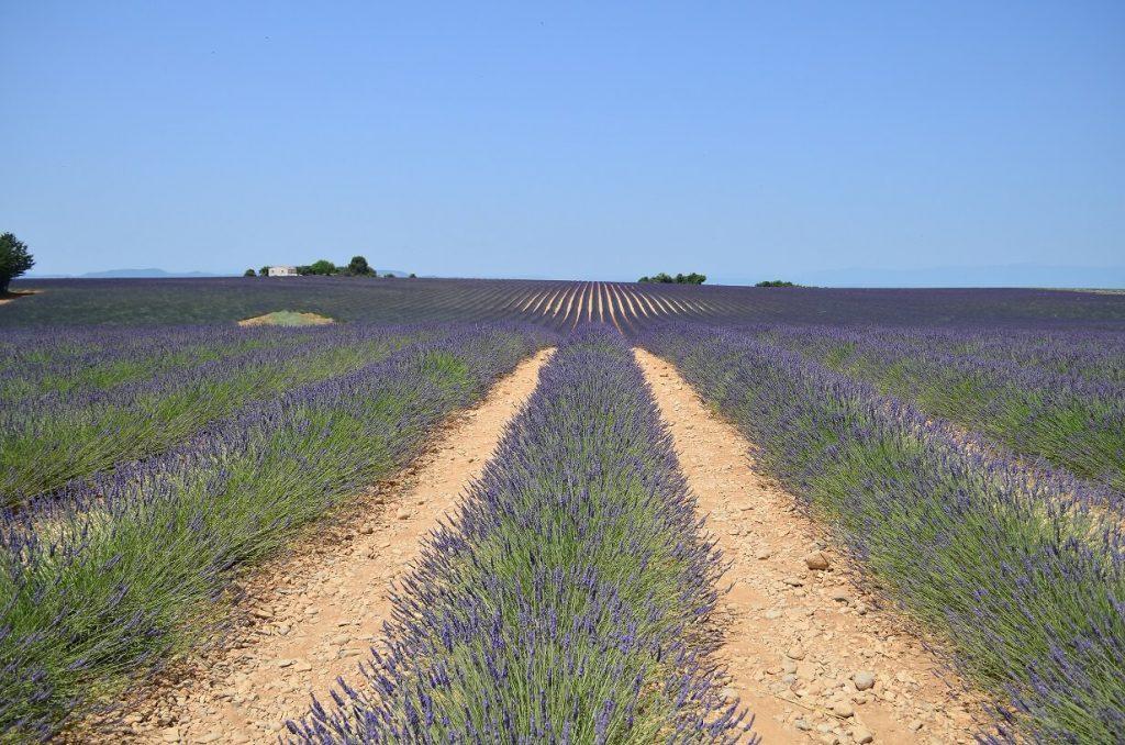 Lavendelfeld Banon