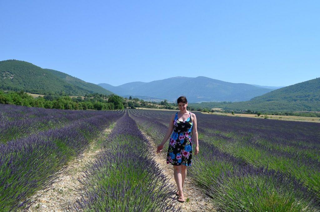 Lavendelblüte Valensole Provence