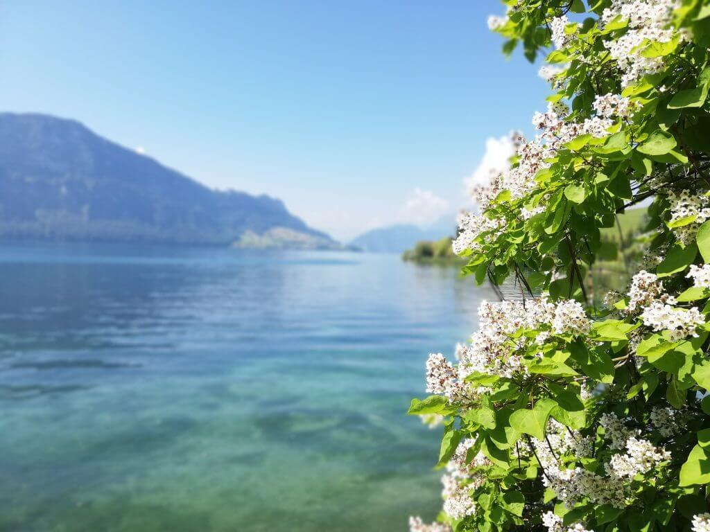 Vierwaldstättersee Schweiz