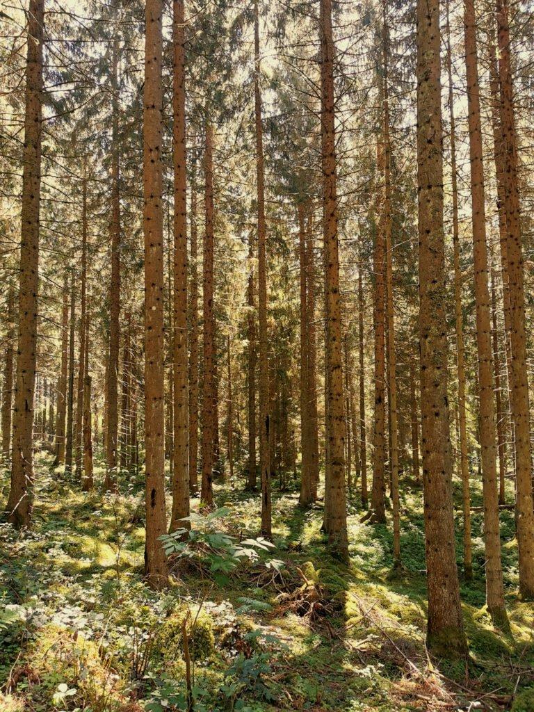 Schwarzwald Jägersteig