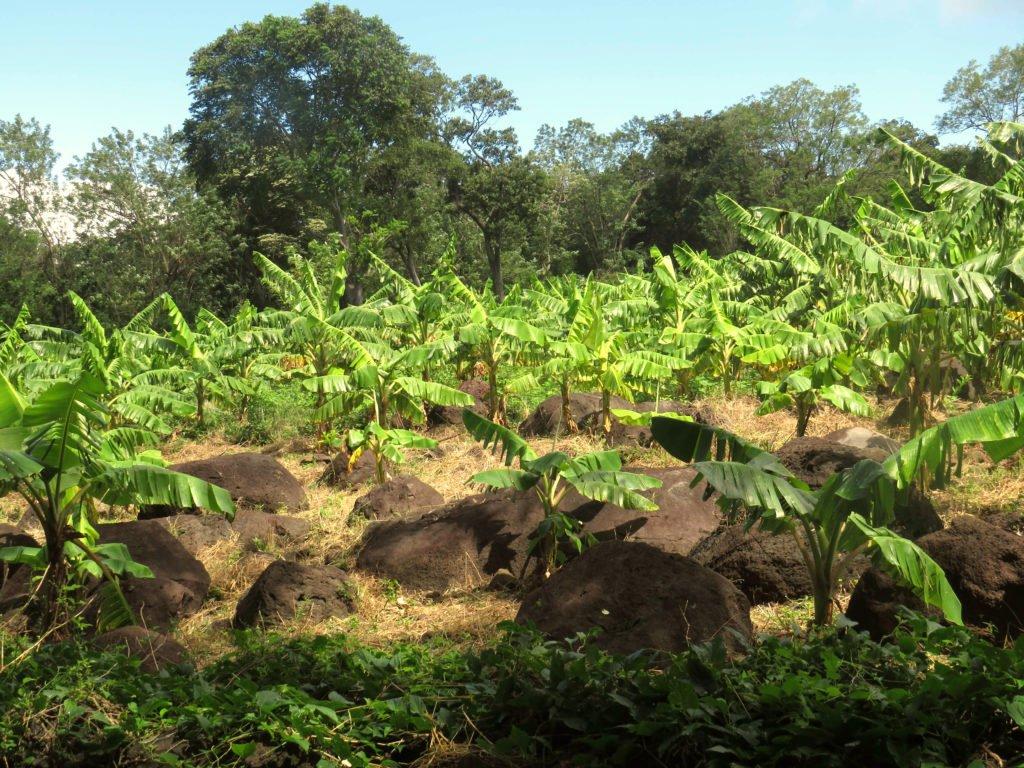 Vulkan Ometepe