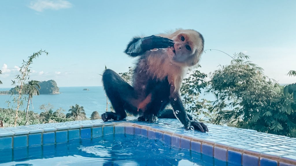 Affen Costa Rica Reise